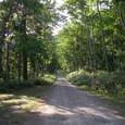 屈斜路湖の林道